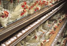 Poultry Layer Farm.