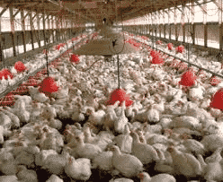 Poultry Farming Guide for Beginners | Agri Farming