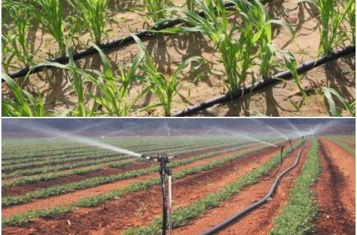 Drip Irrigation Vs Sprinkler Irrigation Farming Agri Farming