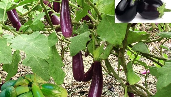 how to grow vegetables at home in india