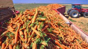 Transporting Carrot
