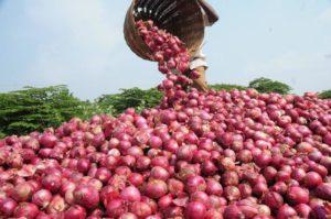 Onion yield