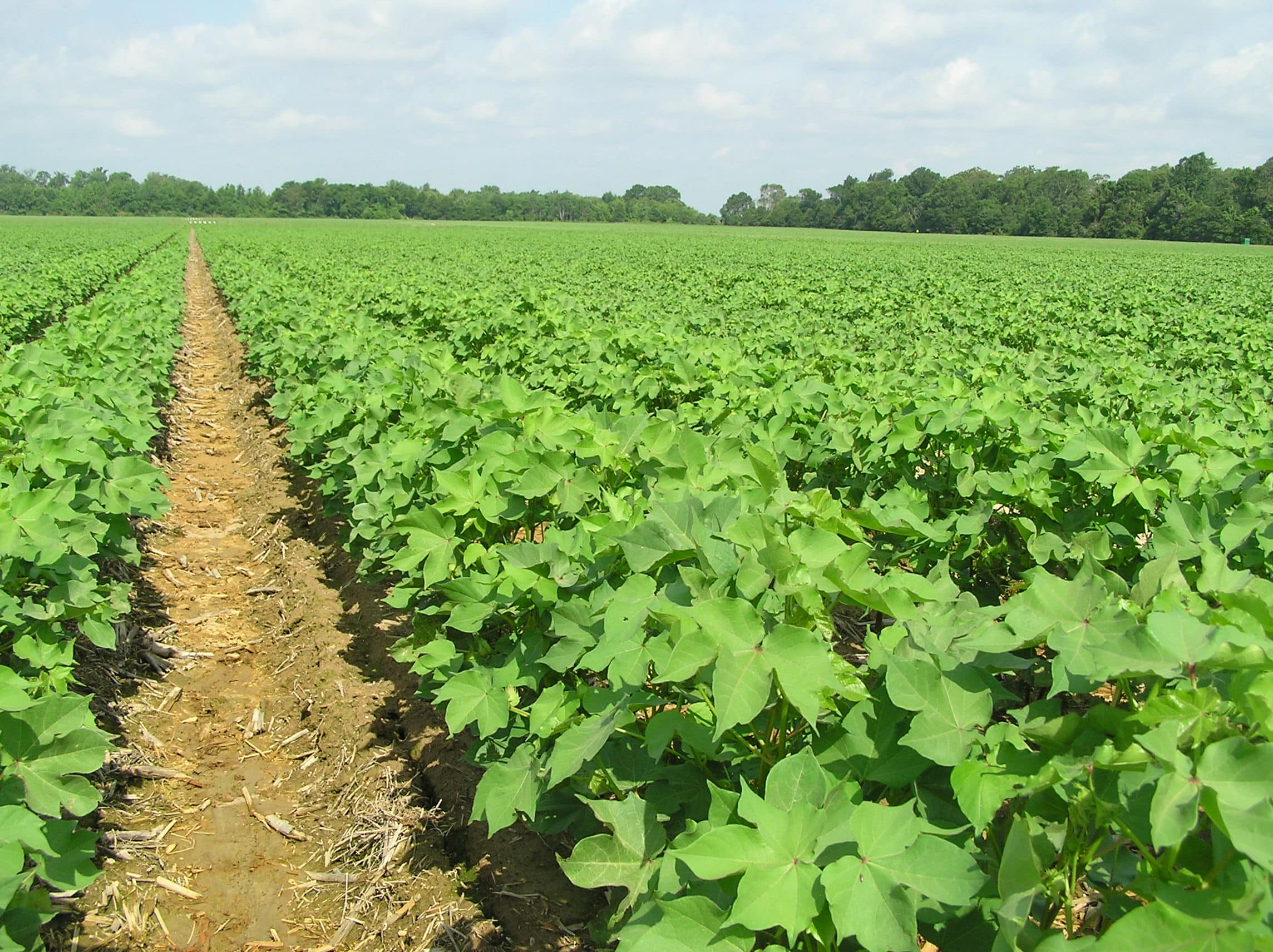 production economics of using watermelon seedmeal The present findings suggest watermelon seeds as considerable source of nutrients in the diet and may have health and economic benefits due to its fibre, minerals, phenolics content and antioxidant activity.
