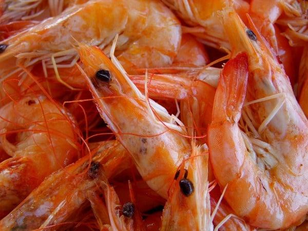 Shrimp Cultivation, Shrimp Culture, Harvesting Methods