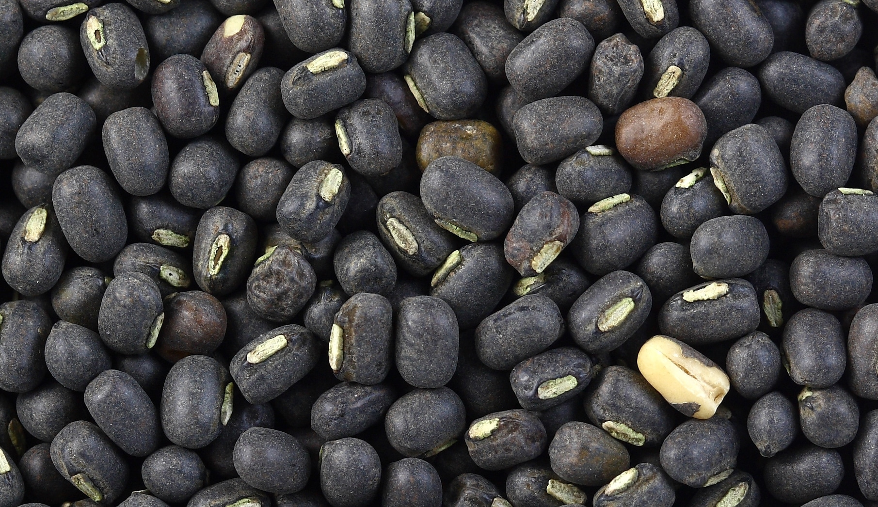 Black Gram Cultivation Urad Dal Guide Agri Farming