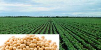 soybean farming basics soybean farming business plan - Agri