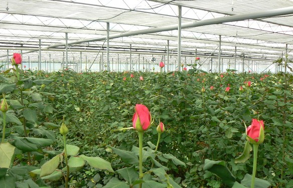 Greenhouse Cost and Profit Details Guide | Agri Farming