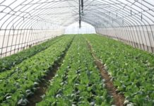 Greenhouse Set Up.