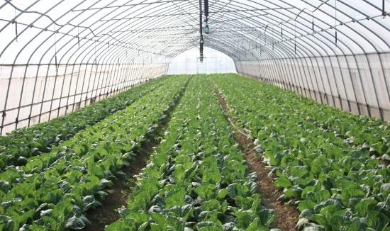 greenhouse farming cost per acre