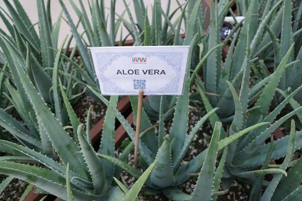 Aloe Vera Farming Information Guide For Beginners Agri Farming