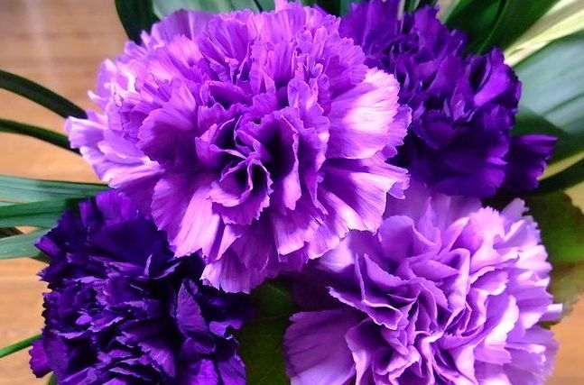 Carnation Cultivation In Greenhouse Agri Farming