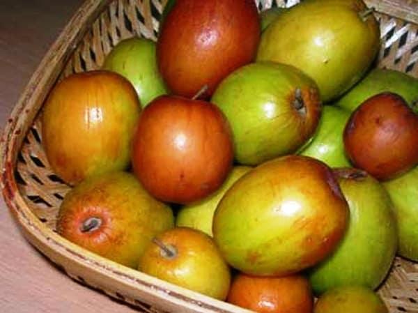 Ber fruit Cultivation