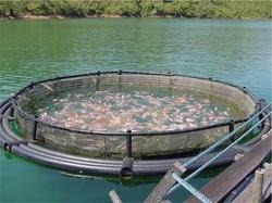 Rohu Fish Farming Information Guide | Agri Farming