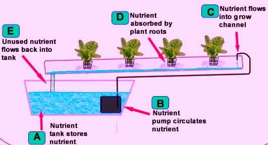 hydroponics farm business plan pdf