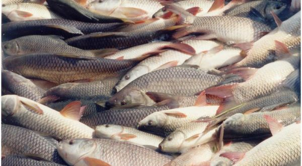 how to start fish farming in hindi
