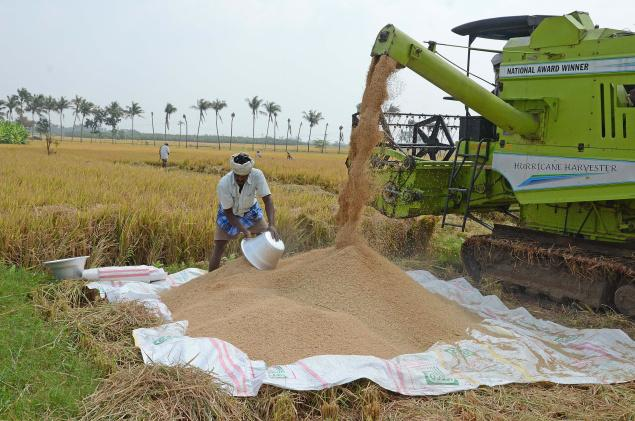 Rice Cultivation Information Guide Agri Farming