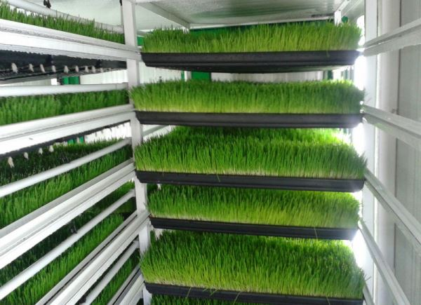 hydroponic green fodder production guide agri farming. Black Bedroom Furniture Sets. Home Design Ideas
