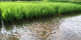 Integrated Fish Farming Ppt - Agri Farming