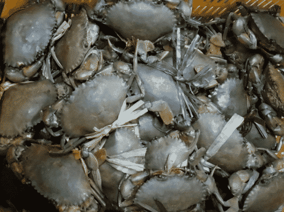 Mud Crab Farming Information Guide Agri Farming