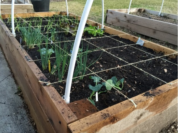 Raised Bed Watering Solutions