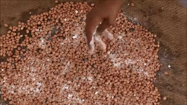 Peanut Seed Treatment.
