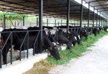 Dairy Farming Business Plan.
