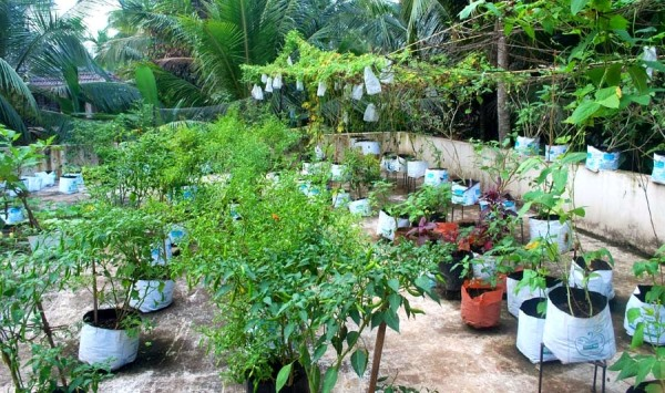 Gardening Ideas And Tips For Beginners Agri Farming