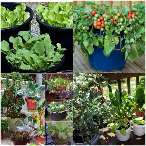 Best Fruits To Grow In Pots: Growing Vegetables In Pots / Containers