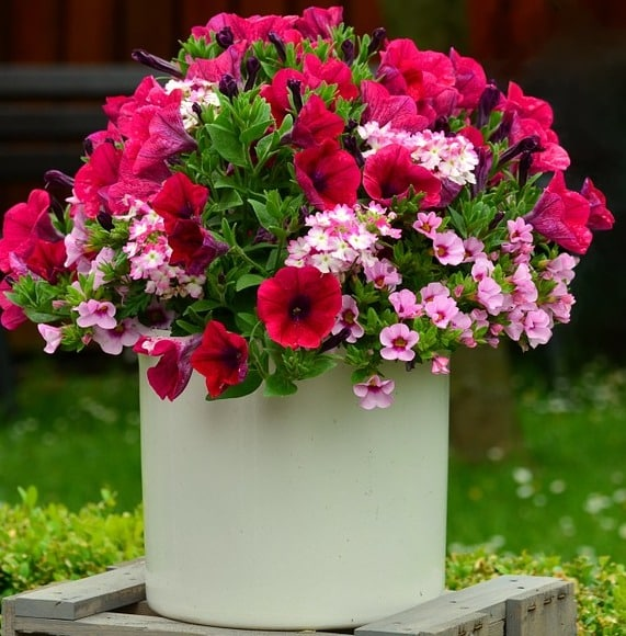 Growing Flowers in Container.