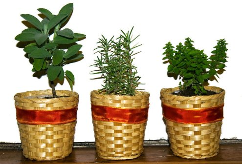 Indoor Gardening A Beginners Guide Agri Farming