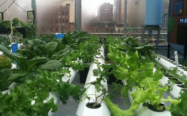 Indoor Gardening Hydroponics.