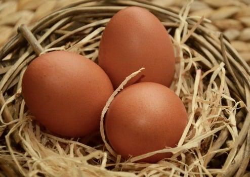 Kadaknath Chicken Breed information | Agri Farming