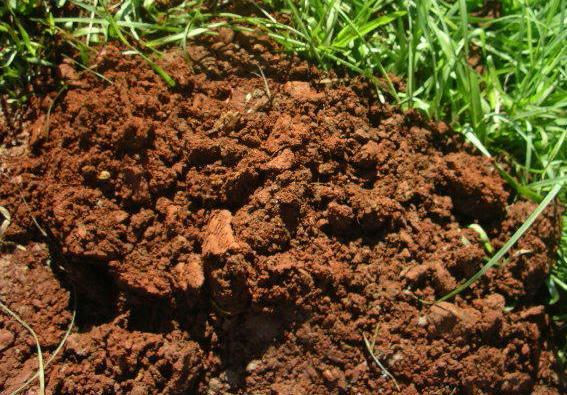 Laterite Soil.
