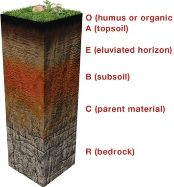 Soil Profile.