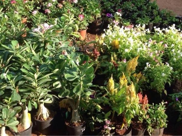 Exotic Plants in Nursery.