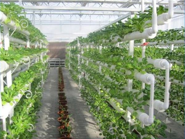 Vertical Cultivation Information For Beginners | Agri Farming