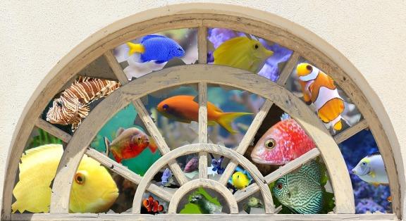 Ornamental Fish Culture.
