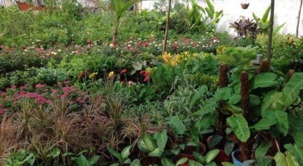 Plant Nursery.