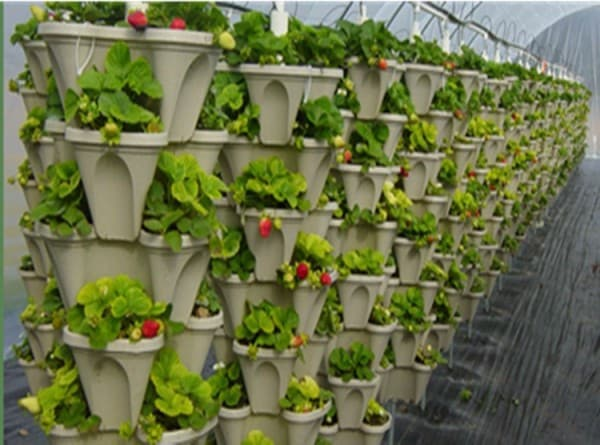 Vertical Cultivation Information For Beginners Agri Farming