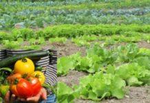Organic Vegetable Gardening.