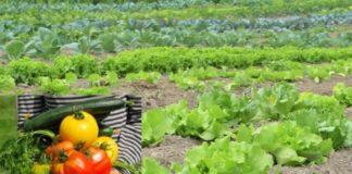 Organic Vegetable Farming For Beginners Organic Vegetable
