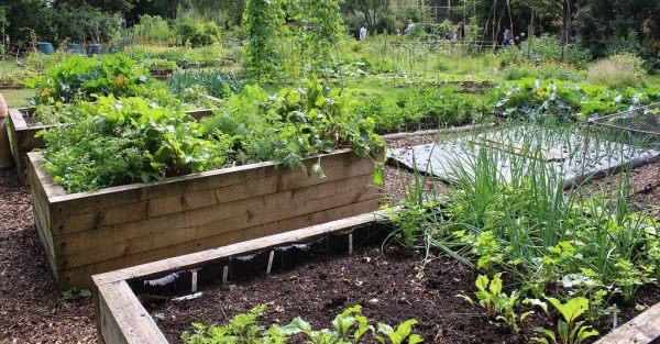 Raised Bed Organic Vegetable Gardening.