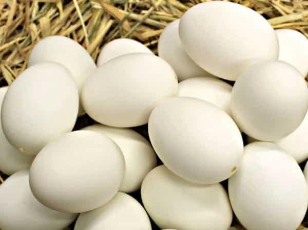 Duck Farming Business Plan For Beginners   Agri Farming