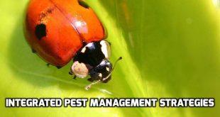integrated pest management strategies pdf