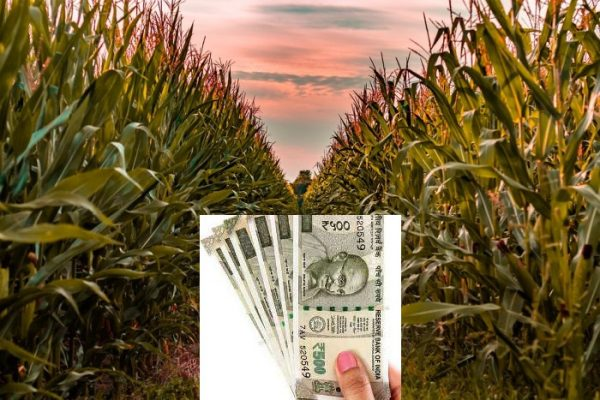 Crop Loans By Banks.