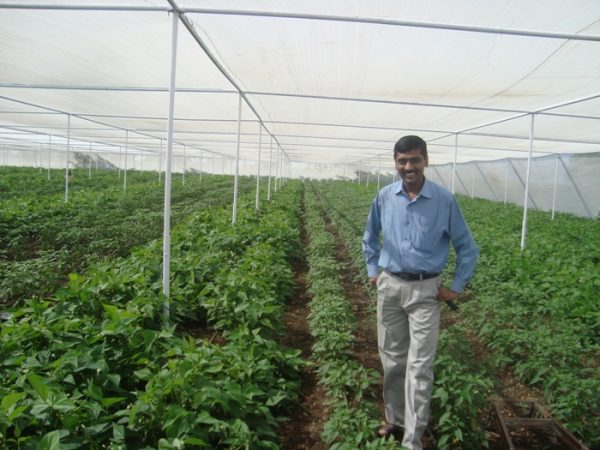Sustainable Farming in Greenhouse ( Pic Source Wikimedia Commons).