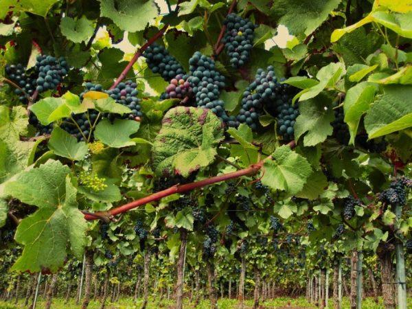 Sustainable Fruit Farming.