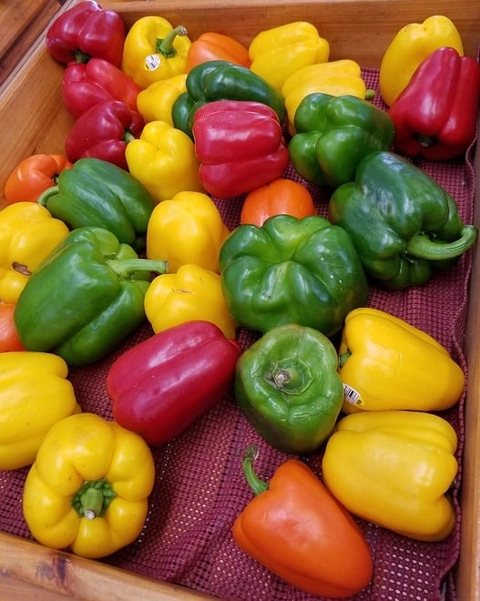 Colored Varieties of Capsicum.