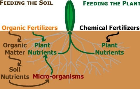 Types of Organic Fertilizers for Plants in Agriculture