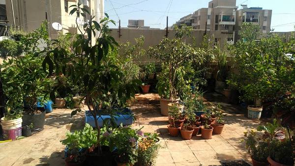 Requirements for Terrace Gardening.